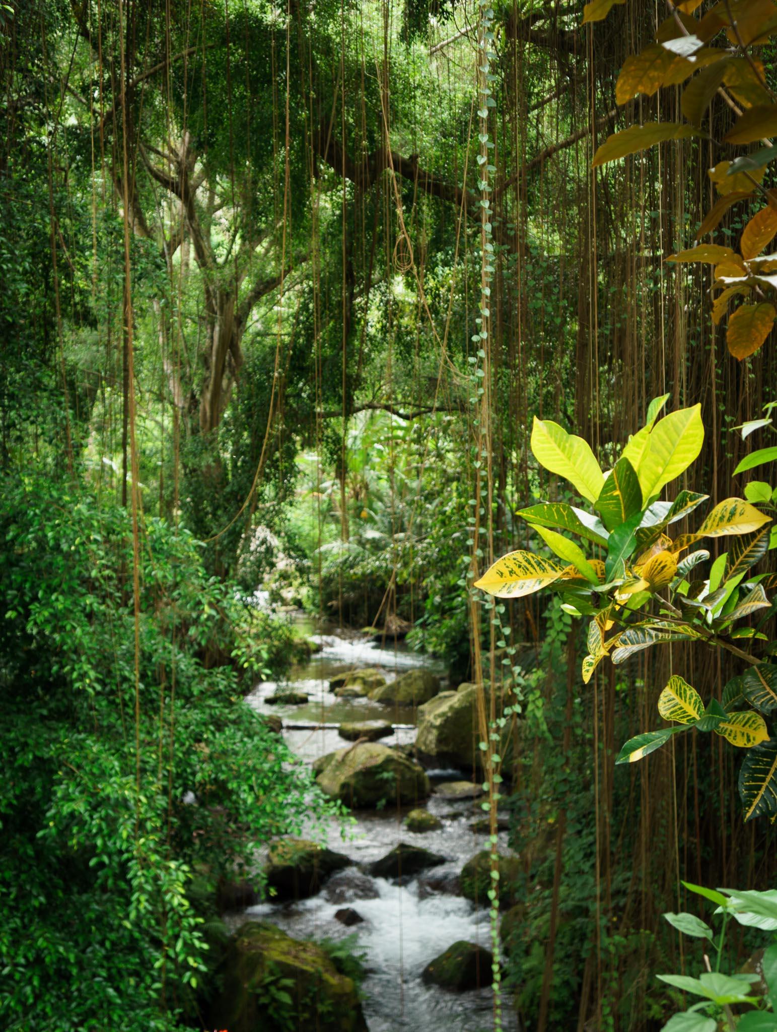 Jungle Stream Spiritual Ubud Bali
