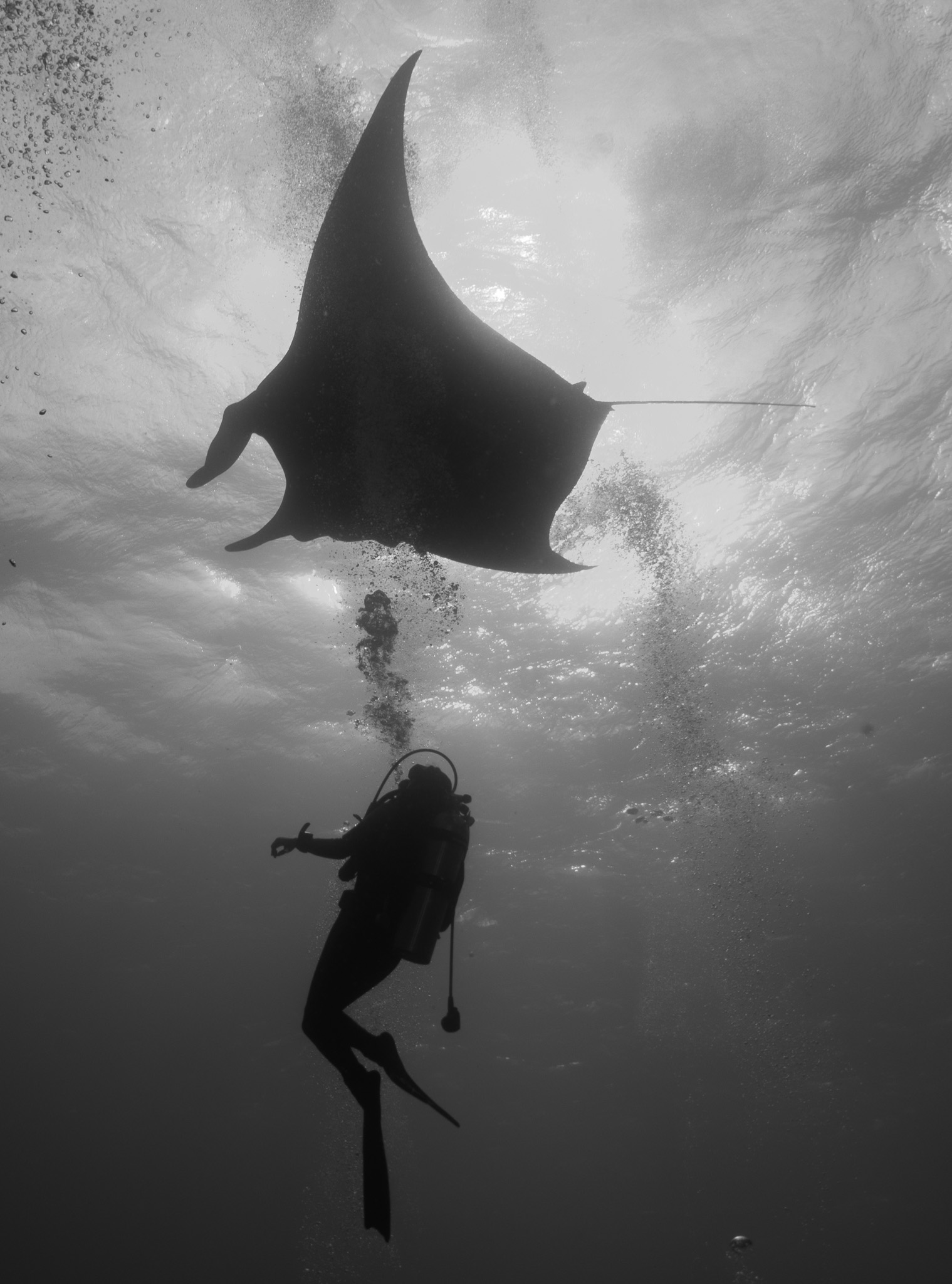 Manta Giant Bubbles Socorro Mexico