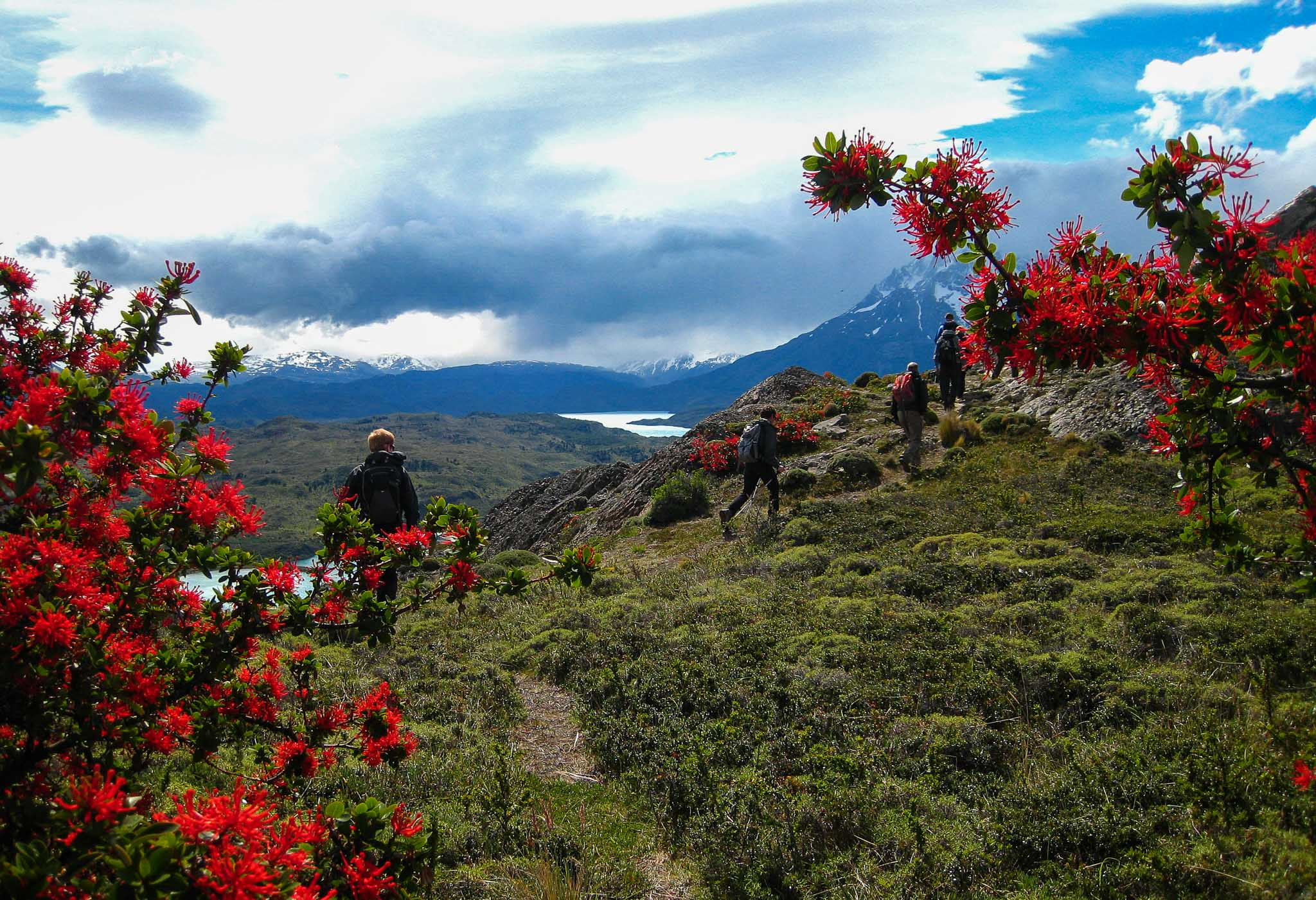 Red Flowers Hike Patagonia Chile