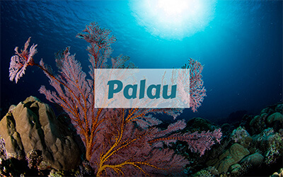 destinations-palau