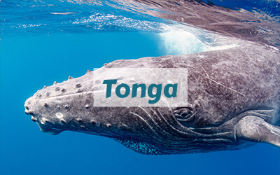 destinations-tonga