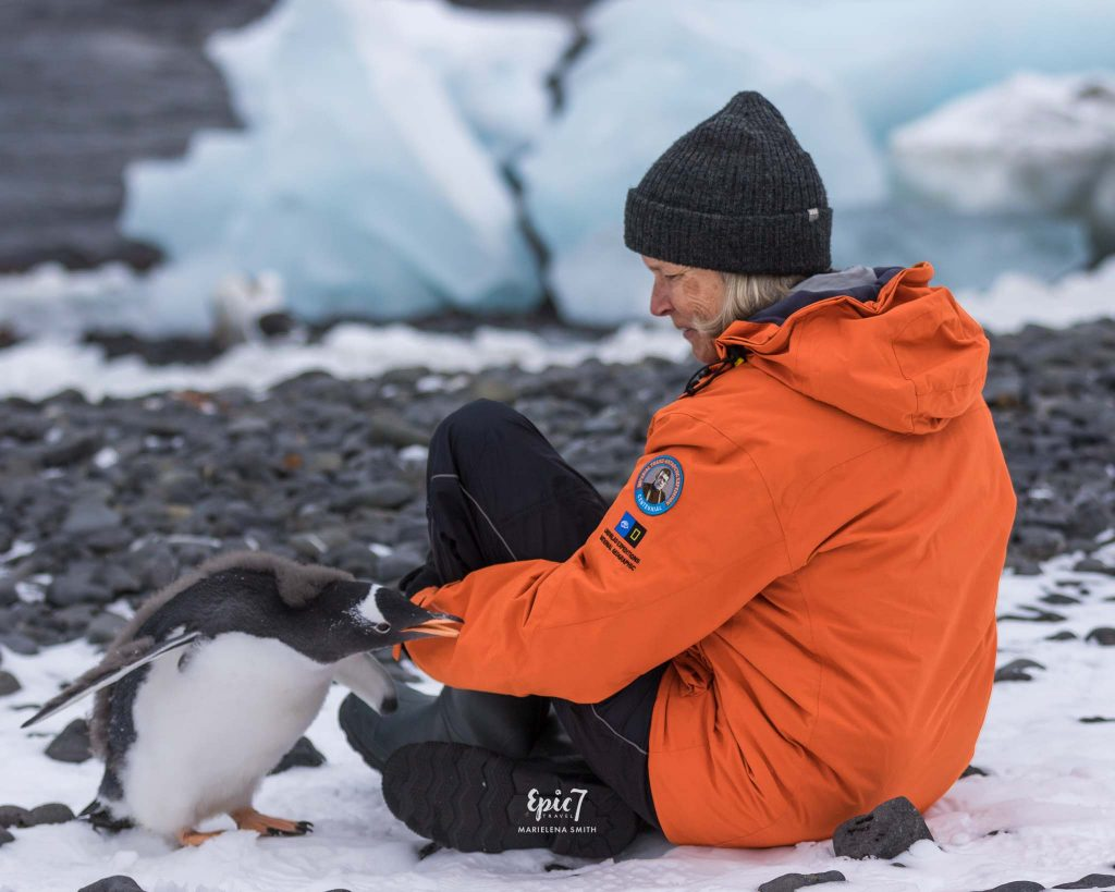 25 Surprising Things to Do In Antarctica - Curious Gentoo Penguin Chick