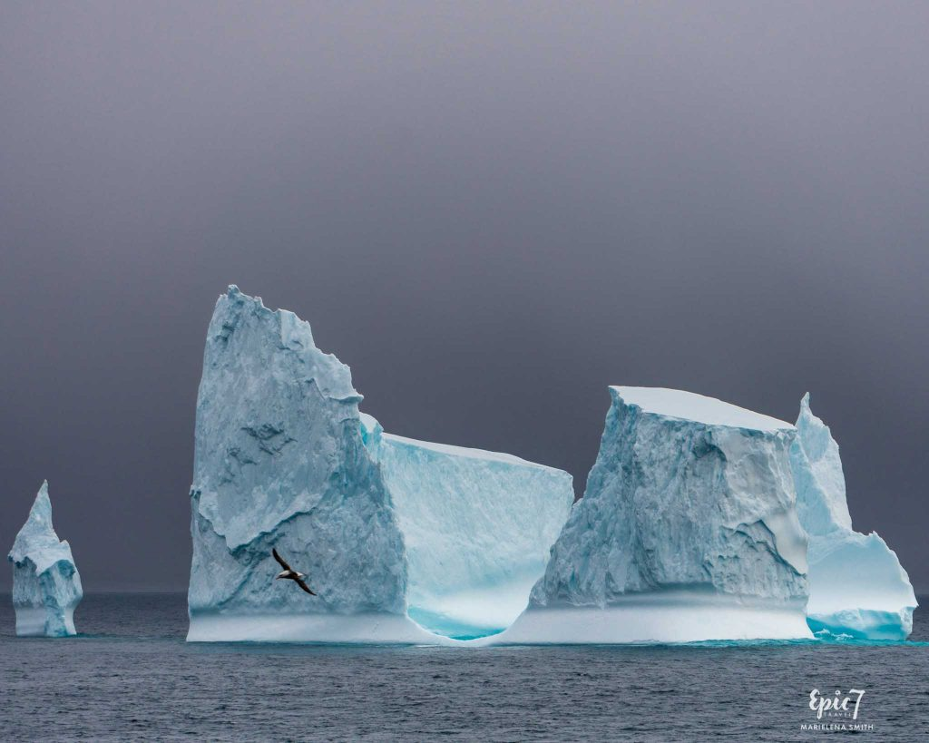 25 Surprising Things to Do In Antarctica - Iceberg and Albatross
