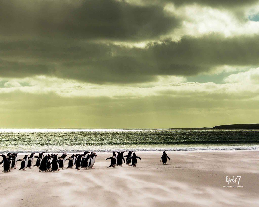 25 Surprising Things to Do In Antarctica - Penguin Parade Falklands