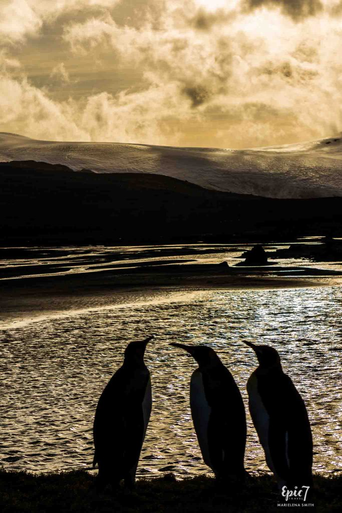 25 Surprising Things to Do In Antarctica - King Penguin Trio Silhouette