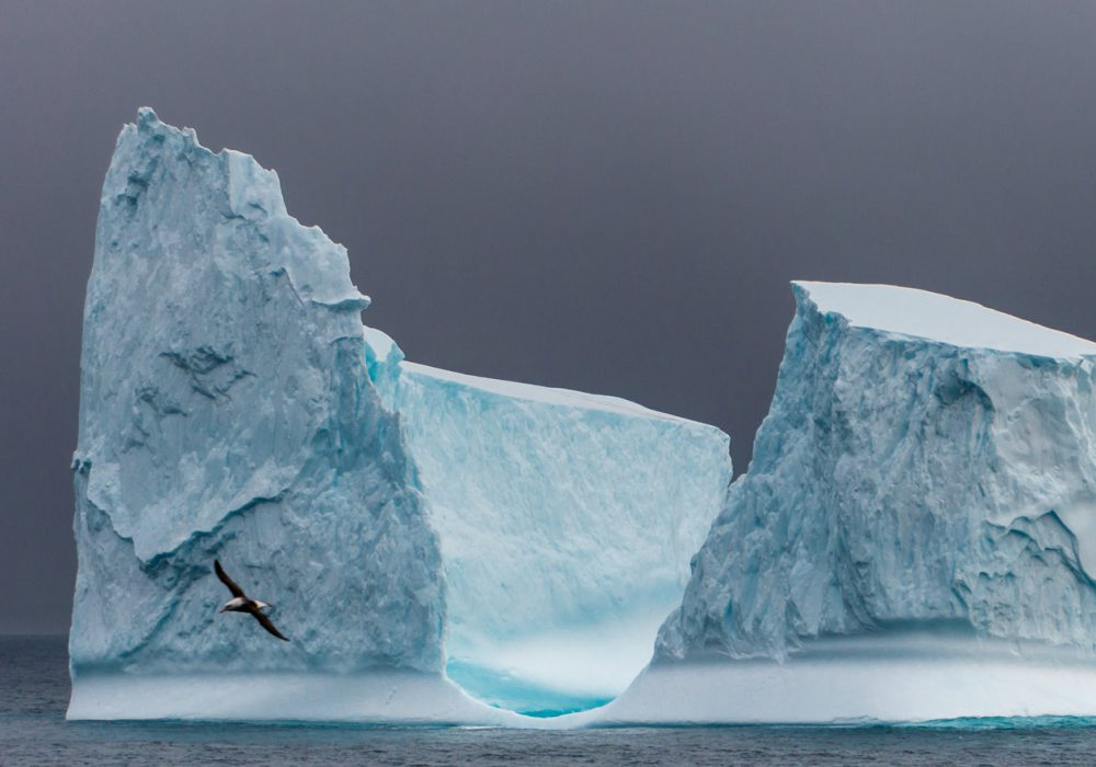 25 Surprising Things to Do In Antarctica