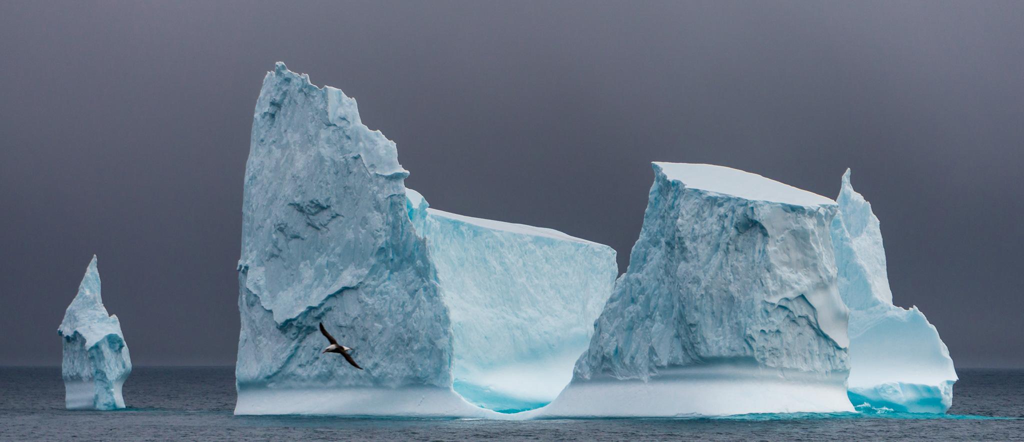 Antarctica Iceberg and Albatross