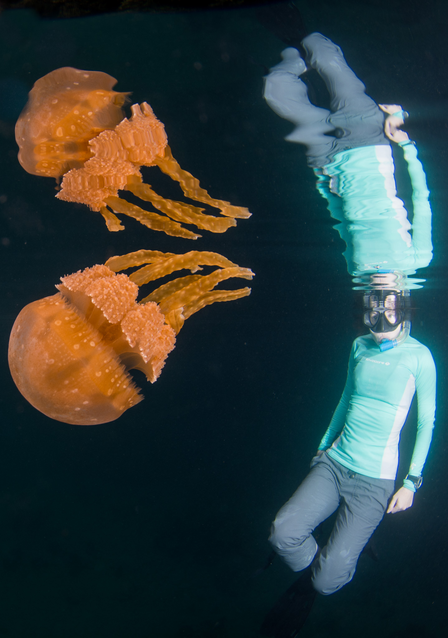 Palau Diving Pictures Stingless Jellyfish Double Reflection