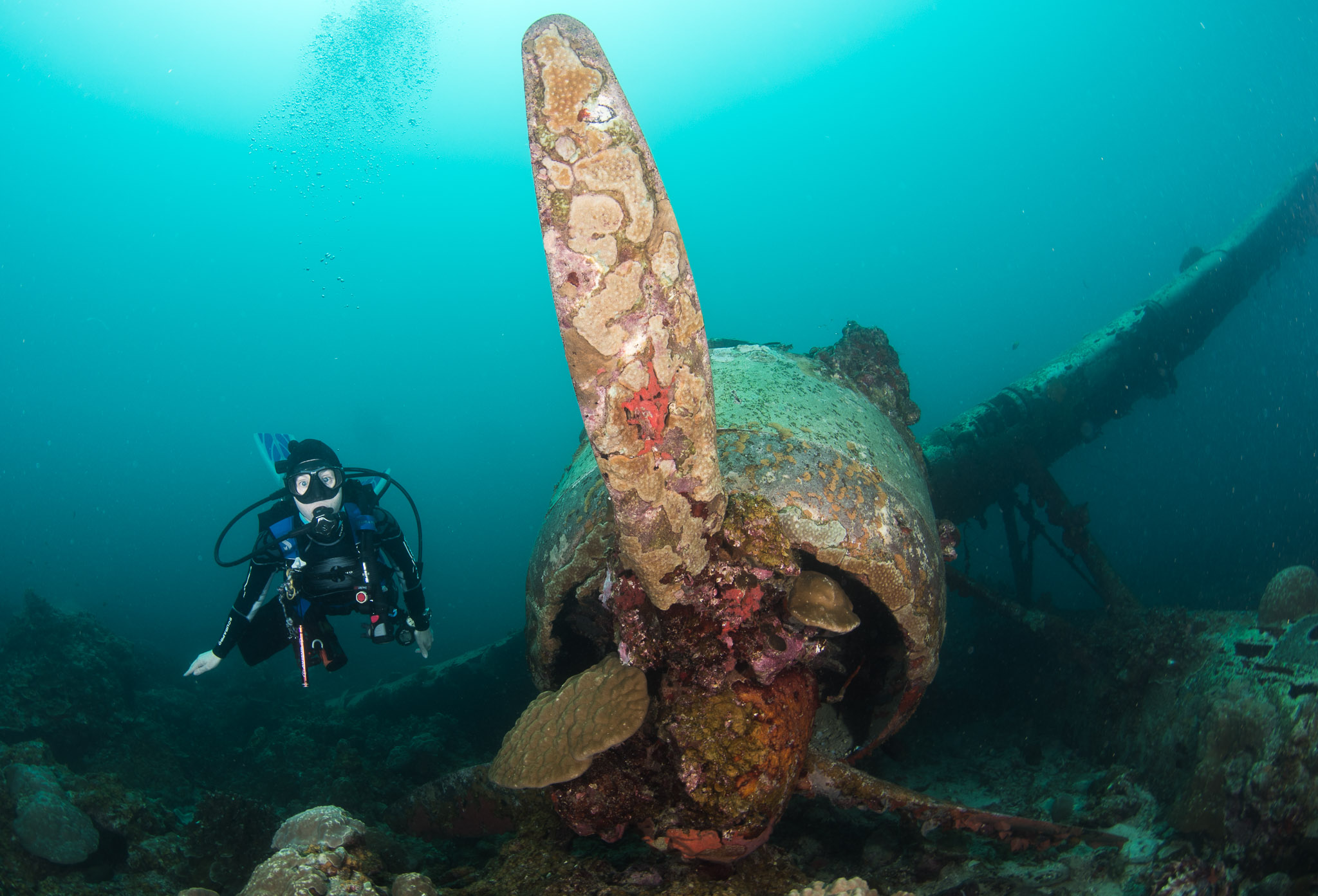 Palau Diving Highlight Jake Seaplane wreck