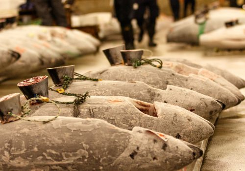 Tuna Pallet Tsukiji Fish Market
