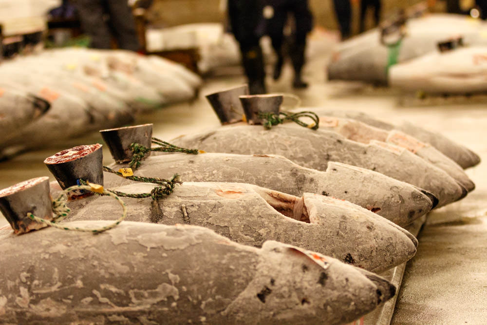 Tsukiji_Fish_Market_Tuna_Pallet