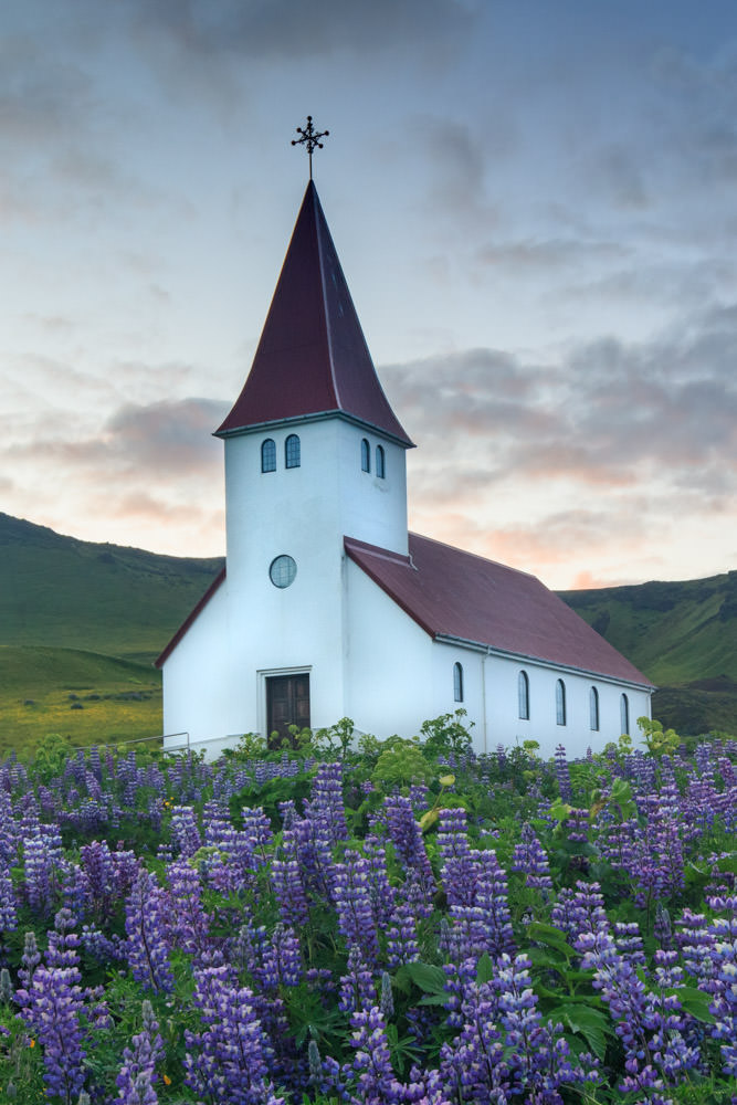 Iceland_Vik_Church_Lupine_Sunrise