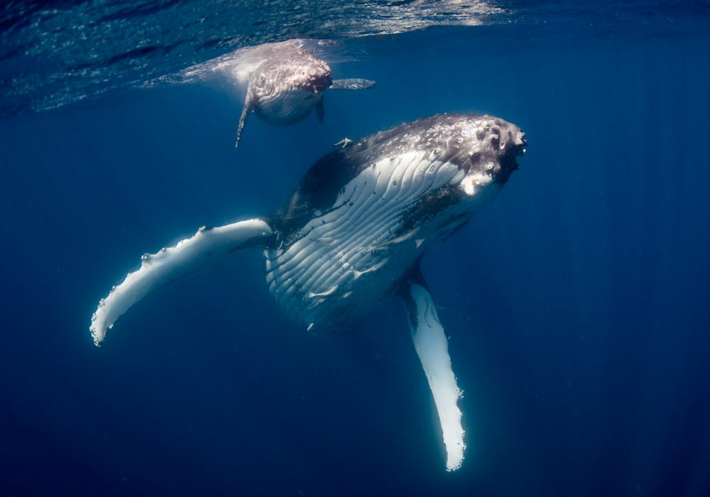 Swimming with Humpback Whales Will Make You Believe in Magic