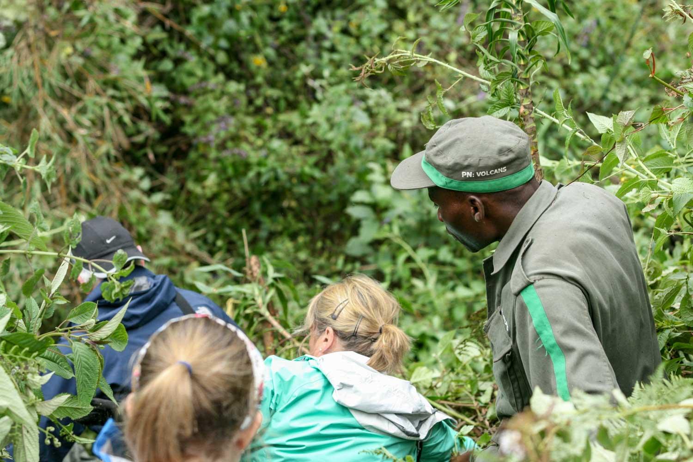 Mountain Gorilla_Rwanda_Trek_Ravine