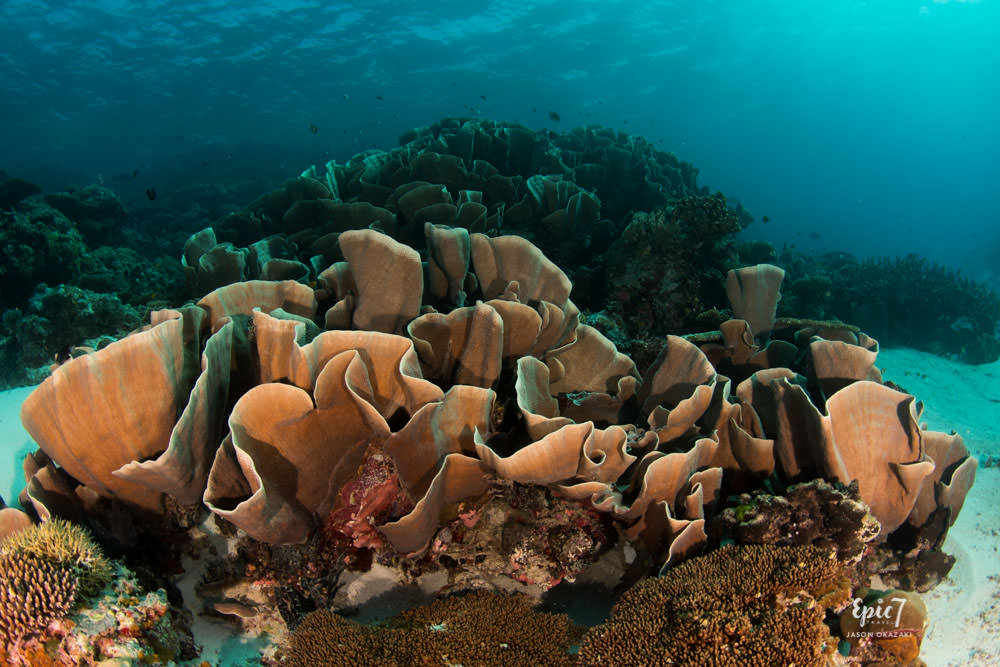Reef Safe Sunscreen_Lettuce Coral_Palau