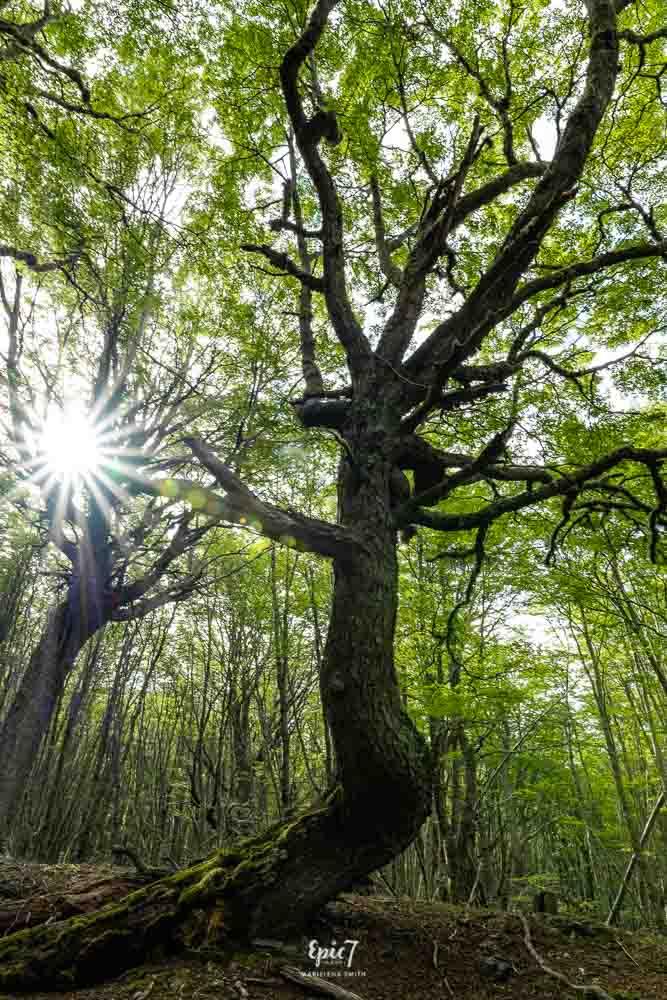 Ushuaia Argentina Arakur Forest Hike