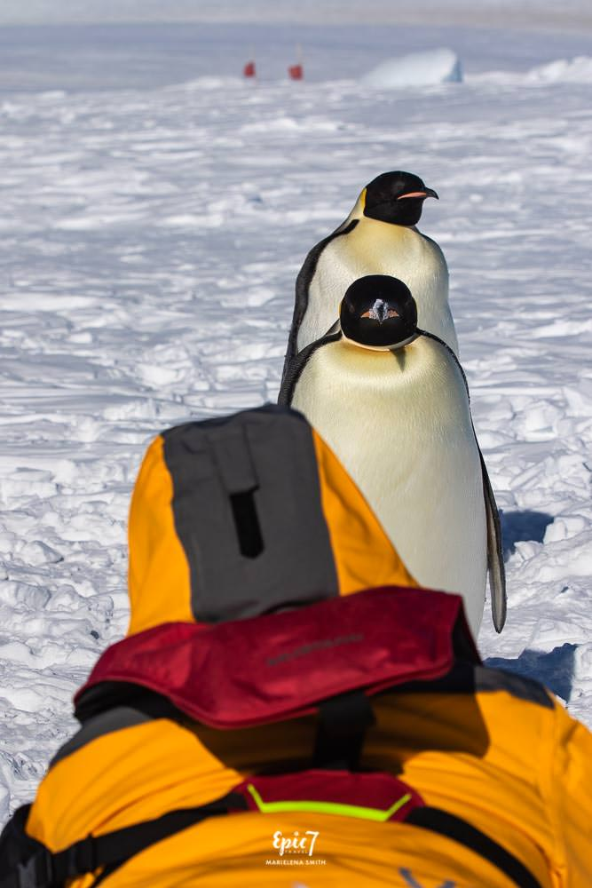 Antarctica Photography Tips_Curious Emperor Penguins