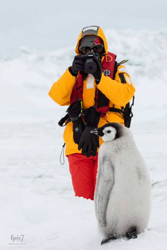 Antarctica Photography Tips_Emperor Penguin Being Photographed