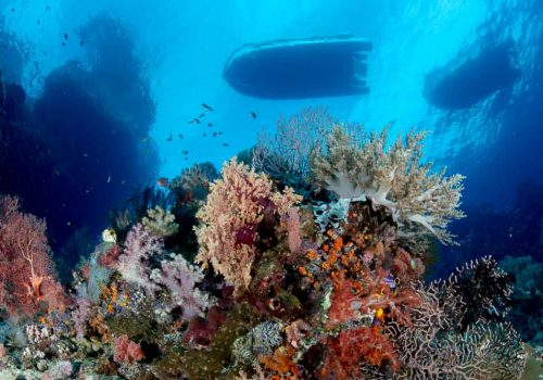 raja ampat diving underwater reef scape