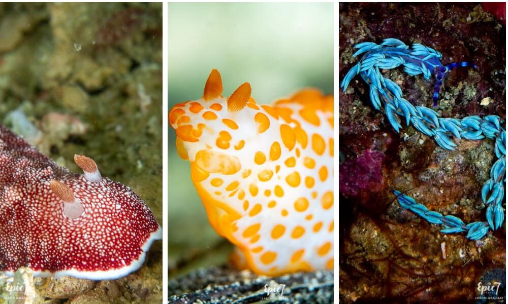 nudibranches raja ampat diving