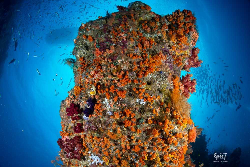 raja ampat colorful coral and dense fish life