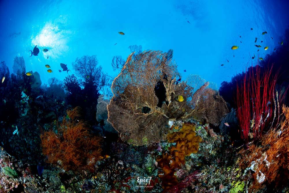 raja ampat diving sea fans and soft coral
