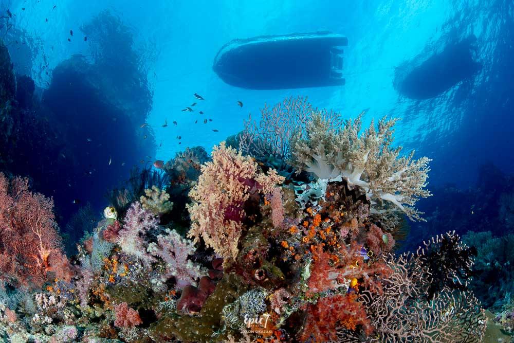 raja ampat diving underwater reef