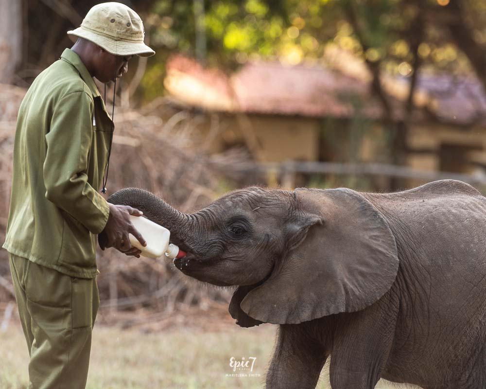 The Greedy Little Elephant