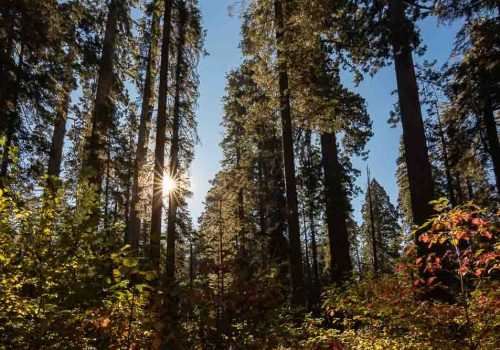 Things to do in Murphys California Headline Image-Calaveras Big Trees State Park