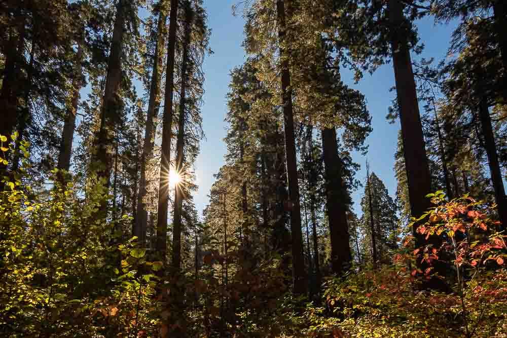 Things to do in Murphys California Headline Image-Calaveras Big Trees State Park