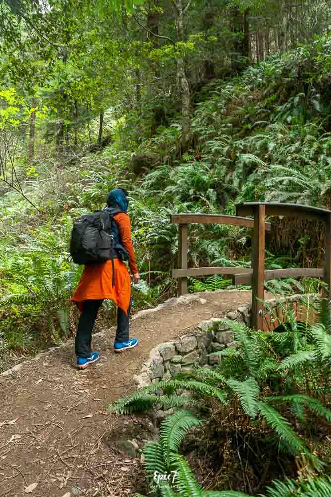 Things to Do in Fort Bragg Glen Blair Junction Redwood Hike