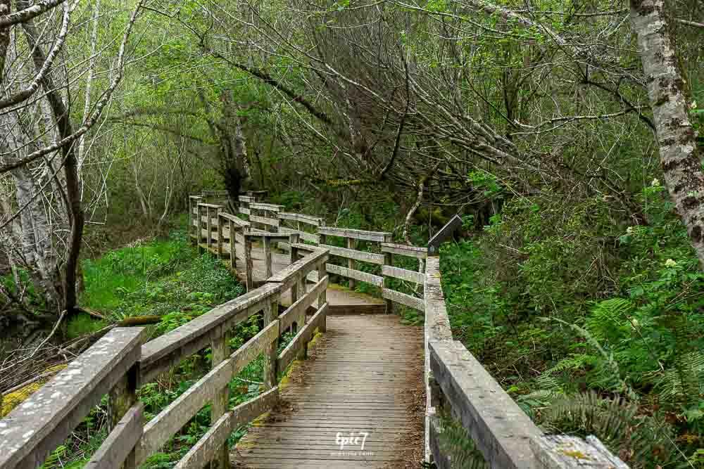 Jug Handle Reserve Pathway