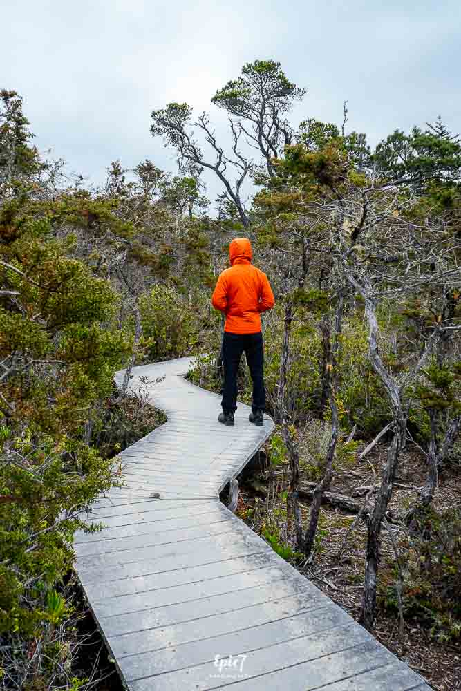Things to Do in Mendocino Jug Handle Reserve Pygmy Forest
