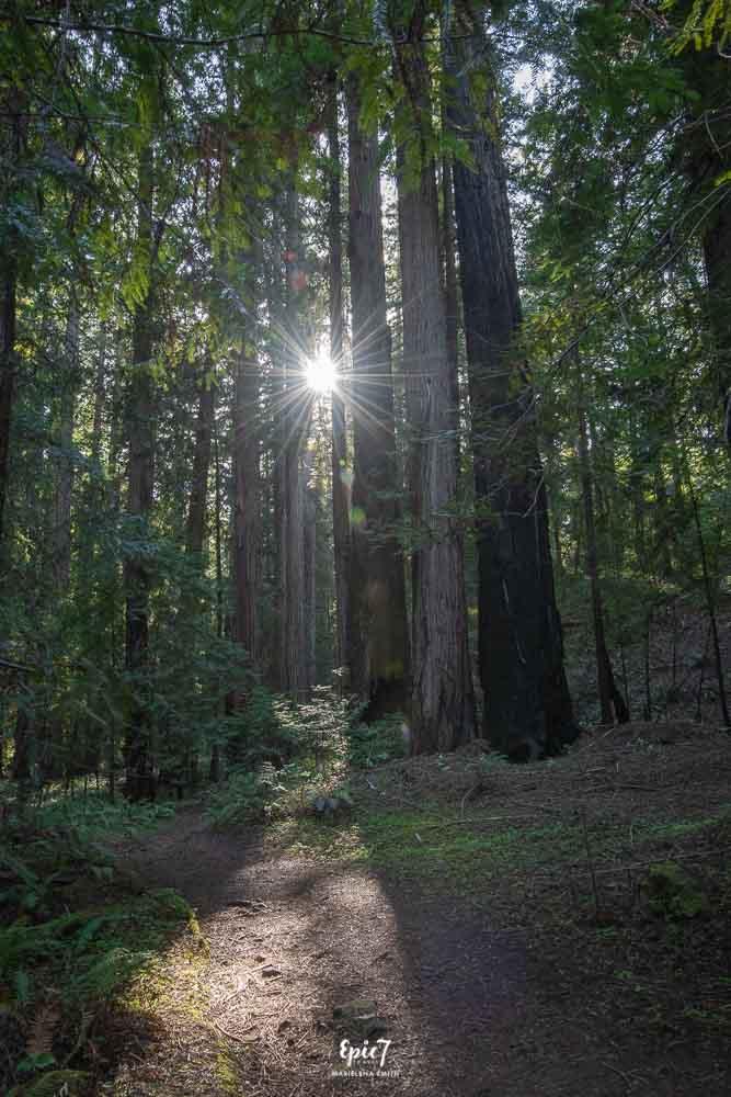 Things to Do in Mendocino Montgomery Woods Sunburst