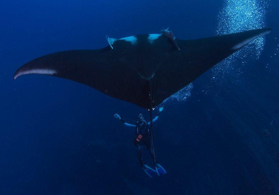 Manta Giant Bubble Blowing Socorro Mexico