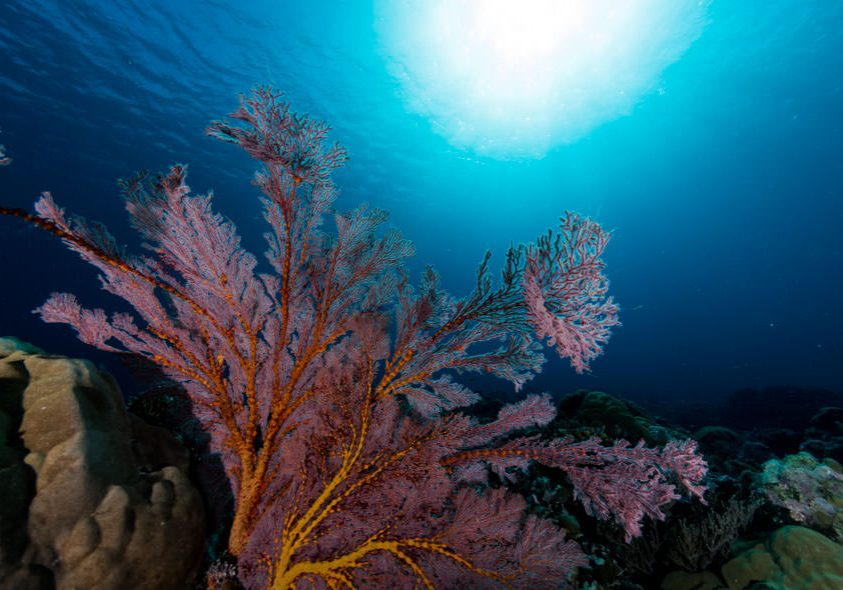 Reef Safe Sunscreen Palau Sea Fan Header